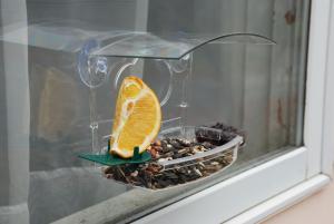 Window Feeders by Woodlink Audubon Series