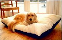 Majestic Pet Rectangle Pet Bed - Medium/Burgundy