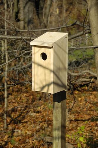 Heartwood Flicker Joy Box Birdhouse