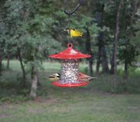Songbird Essentials Dial-A-Seed Bird Feeder, Red