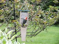 Birds Choice Recycled Doubled Cake Pileated Suet Bird Feeder with Hanging Cable