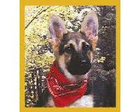 Magnetic Bookmark German Shepherd Pup w/Bandana